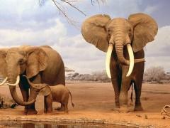 google, wwf, donazioni google, droni, animali a rischio estinzioni, specie protette