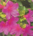 piante,curare piante,piante appartamento,prodotti piante,concimazione,concimare piante,azoto,fosforo,potassio,nutrire piante,